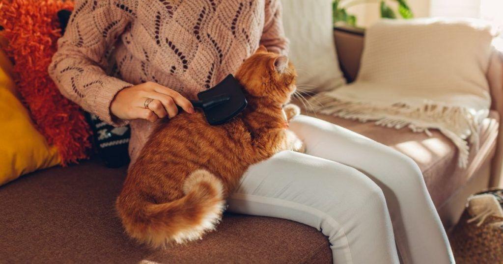 Pet Sit